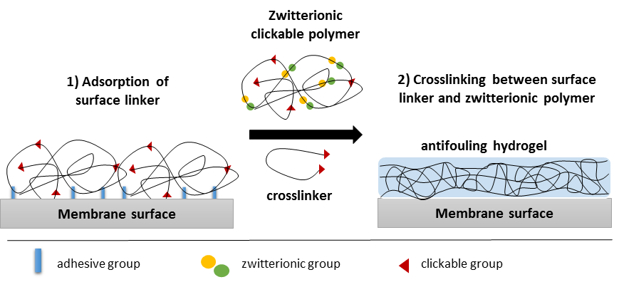 Clickable Anti Fouling Hydrogel Coatings For Filtration